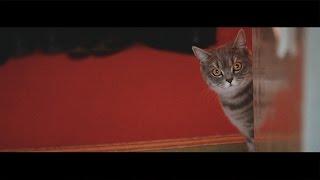 Елена и Александр:Свадебный клип:Wedding clip.Свадьба во Владимире.