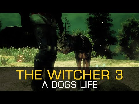 a-dogs-life-tame-pet-novigrad-velen---the-witcher-3-wild-hunt-gameplay-pc