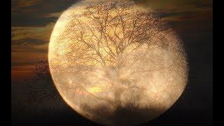 Beethoven: Moonlight Sonata [Piano Sonata No. 14] [Quasi Una Fantasia]