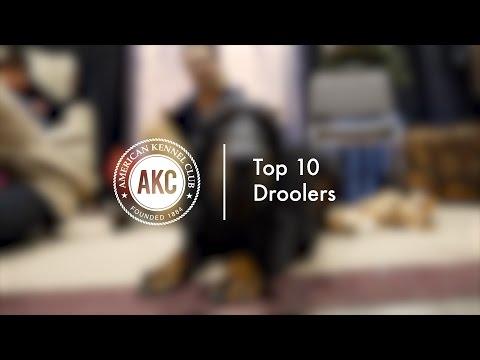 Top 10 Droolers