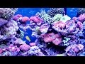 Download Video 爭奇鬥豔珊瑚海景缸-2016臺灣觀賞魚博覽會 Seawater aquarium landscape MP4,  Mp3,  Flv, 3GP & WebM gratis