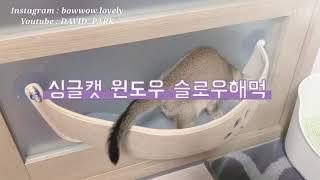 [LOVELY & LEO] 싱글캣 윈도우 슬로우해먹?
