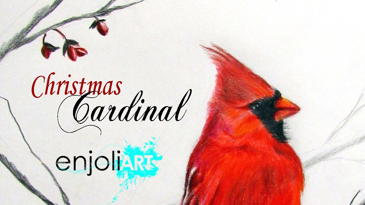 Christmas Red Cardinal | Speed Drawing - YouTube