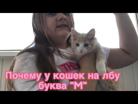 Почему у кошек на лбу буква «М»?