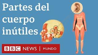 6 partes del cuerpo que ya no necesitamos | BBC Mundo