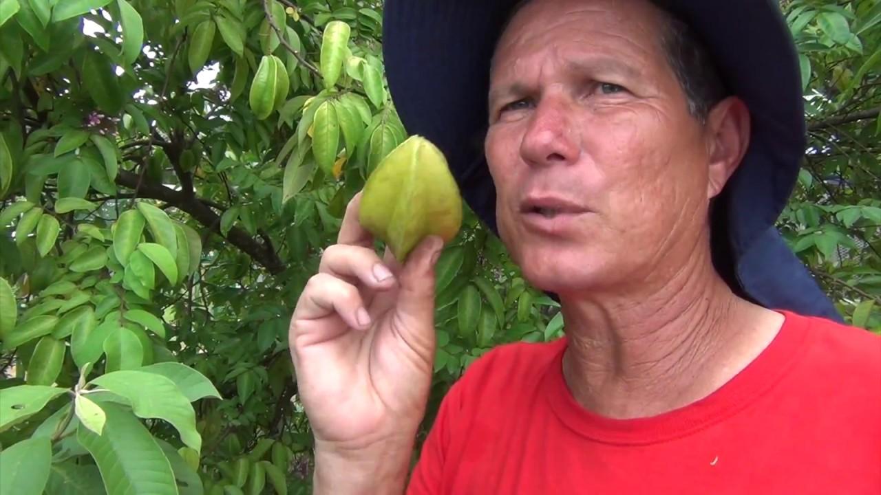 Frutas en el Huerto