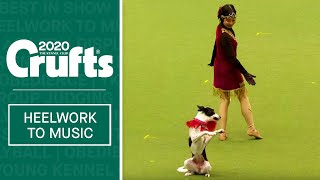International Freestyle Heelwork To Music  Part 2 | Crufts 2020