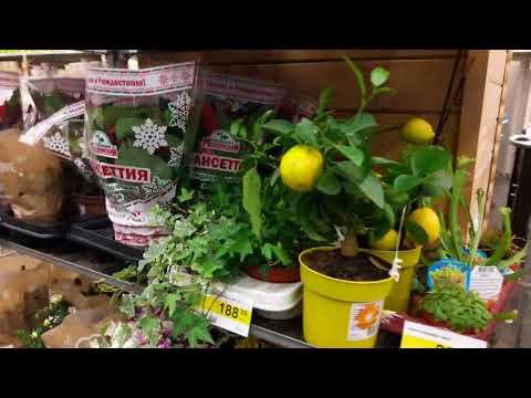 Обзор магазина.Леруа Мерлен.Кухни ,наборы для кухни-пластик,дерево,металл.