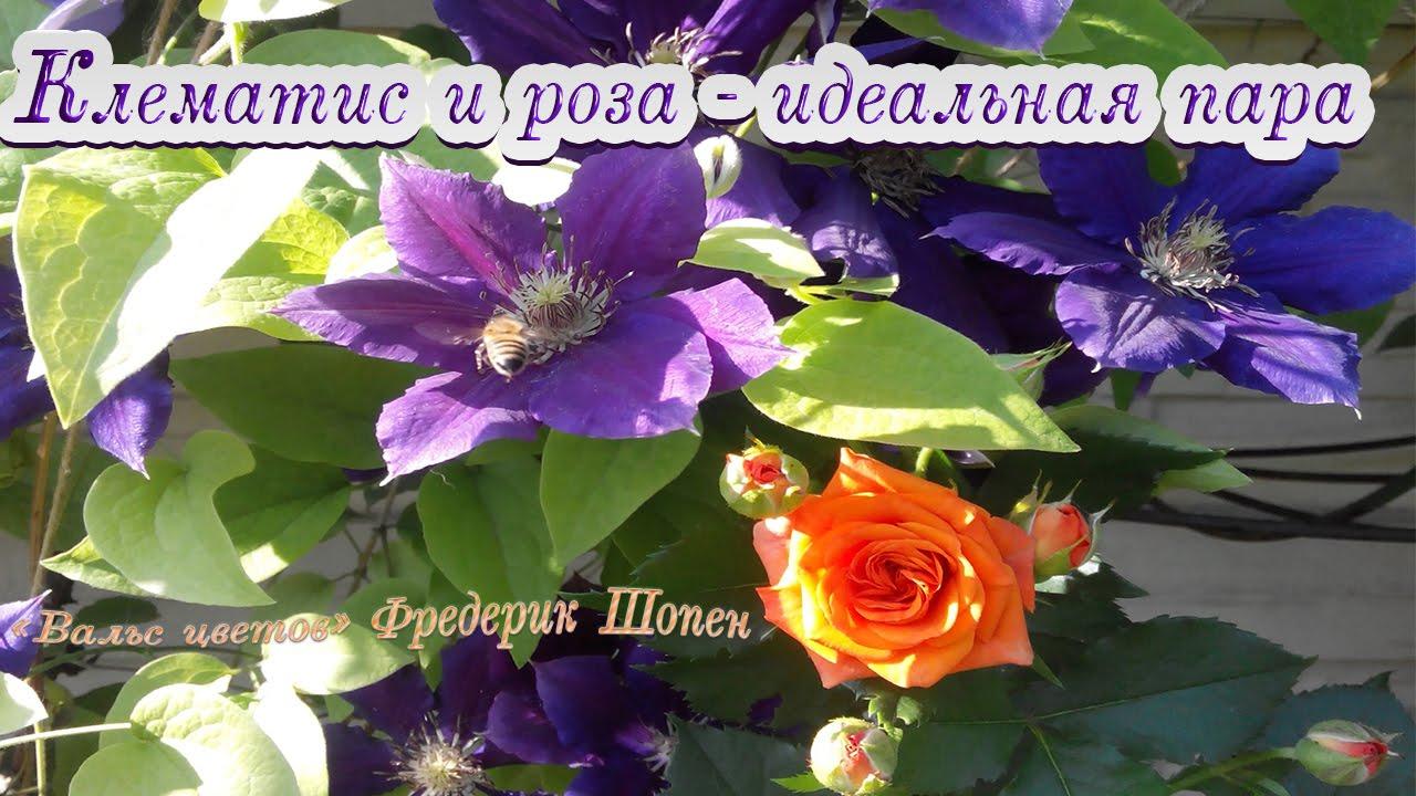 Шопен видео вальс цветов