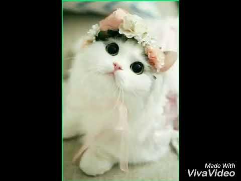 Wallpaper Kucing Imut Lucu 2 Youtube