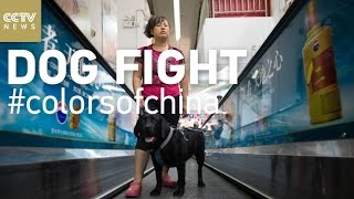 Dog Fight: The Struggle To Bring Guide Dogs To China