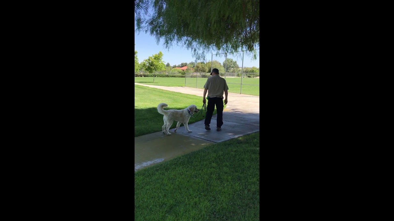 Walking On Leash — Homeskooling 4 Dogs