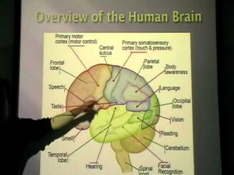 the-neuropsychology-of-self-control---and-its-implications-for-ai-[ukh+]-(1/8)