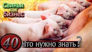 видео: ЧТОБЫ ЗАВЕСТИ СВИНОМАТКУ...