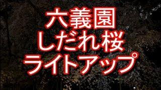 六義園 しだれ桜ライトアップ 東京 thumbnail