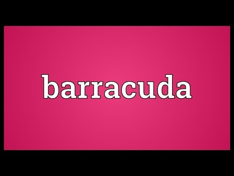 Barracuda Meaning