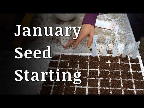 January Organic Seed Starting
