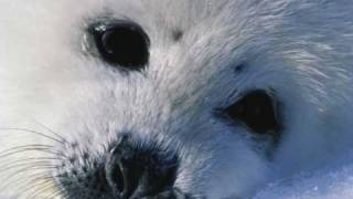 Look again, baby seal  (written by Michael Jackson)