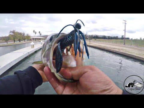 Lake Ming Bass Fishing