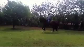 QUIROMANTICO OC  Vendo caballo ibero americano