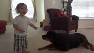 Baby Feeding Rottweiler Treats