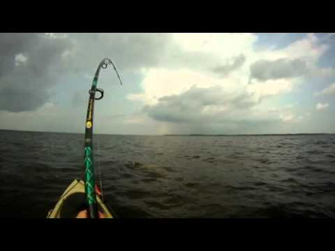 NC Giant Red Drum From Kayak!