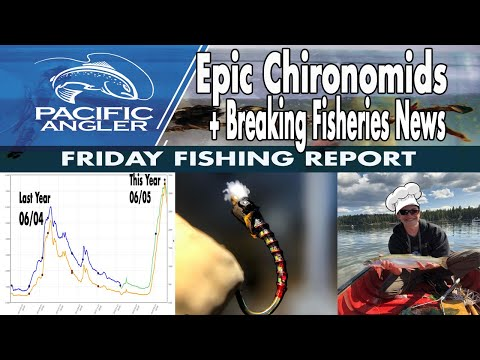Pacific Angler Vancouver Fishing Report - June 12, 2020 Amazing Chironomids & The Fly Box Give Away