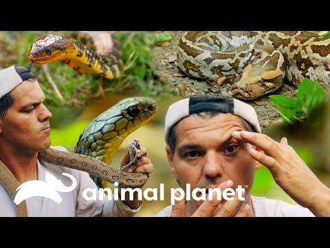 Encuentro cercano con las serpientes más letales de Asia | Wild Frank en India | Animal Planet