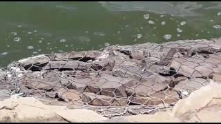 змеиное гнездо - Таганрог Лиман