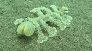 Predator Seaslug!!!