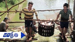 Thương lái Trung Quốc mua cá tra giá cao với mục đích gì?   VTC