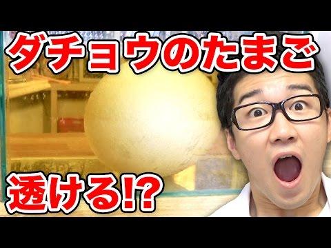 おもしろーい!高校生が「殻を割った卵からヒヨコをふ化させ ...
