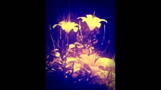 White Lilies- Peder (feat. Anne Trolle)
