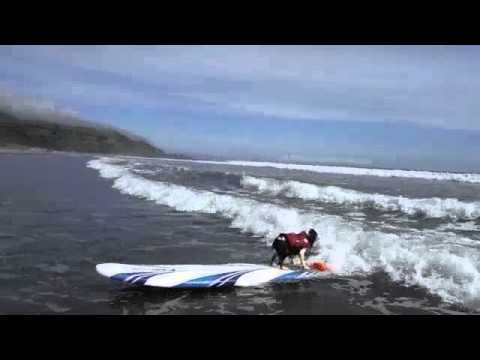 SAMSON & DELILAH SURF STINSON M