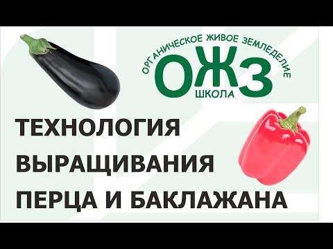 Школа ОЖЗ (1) - технология выращивания перца и баклажана
