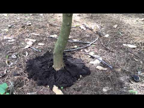 When Life Gives You Poo Poo, Make Fertilizer!