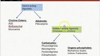 Pharmacology: Muscarinic Agonists