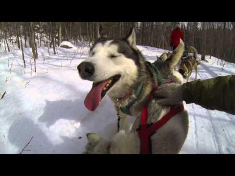 hike!-experience-dogsledding-(18+)