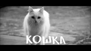 Всемирный день кошек в России -  1 марта