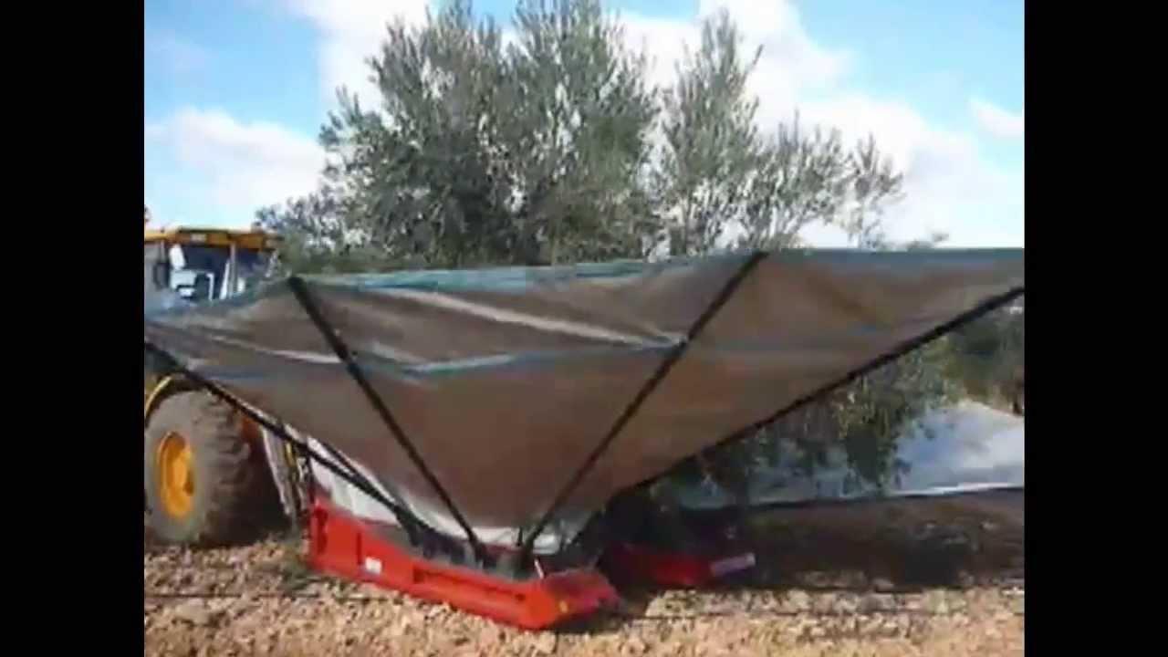 Raccolta olive - Bosco Srl - costruzione macchine agricole