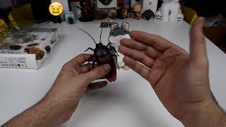 Η επίθεση της γιγαντιαίας Κατσαρίδας!🤪