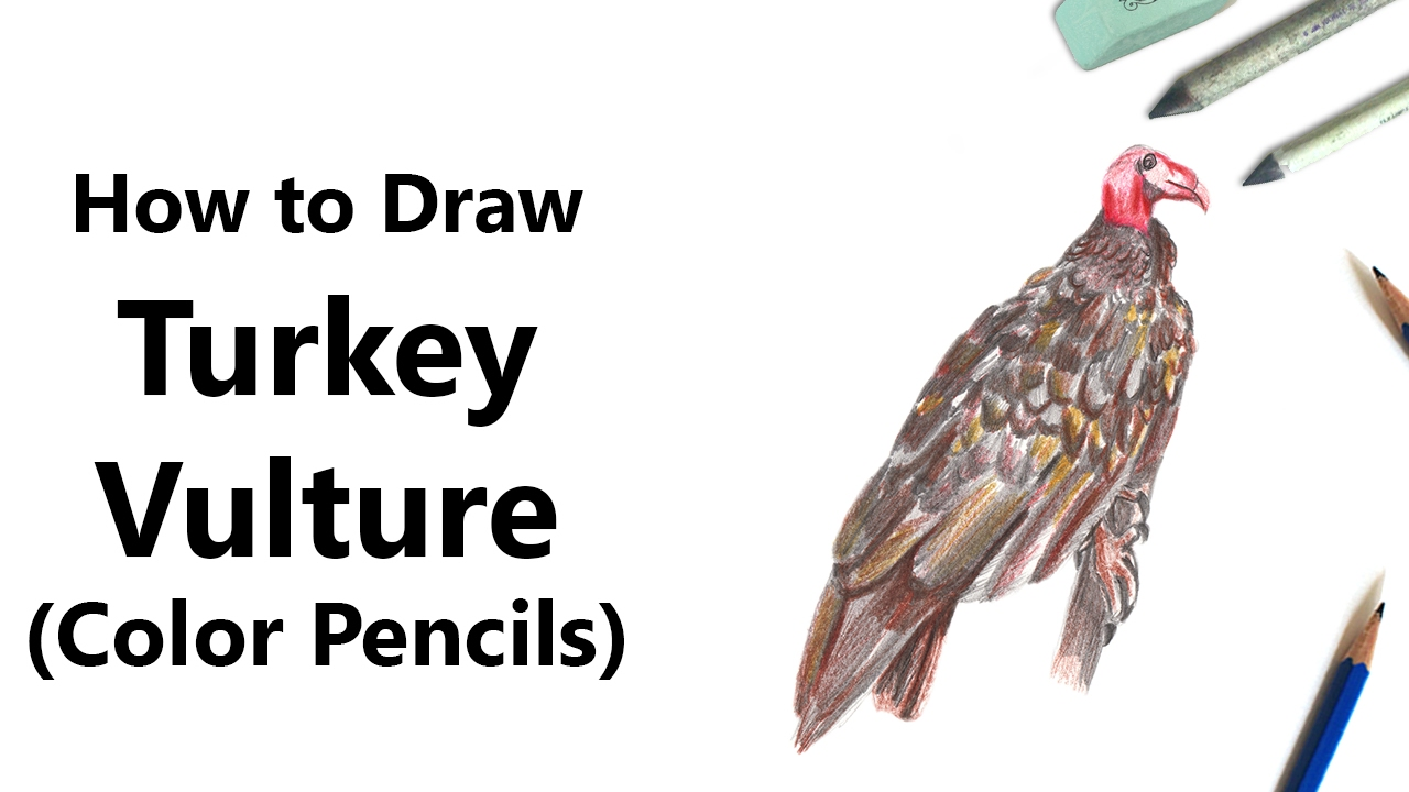 how to draw a turkey vulture with color pencils time lapse youtube