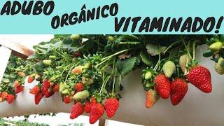 Adubo Orgânico Caseiro Vitaminado para Morangos