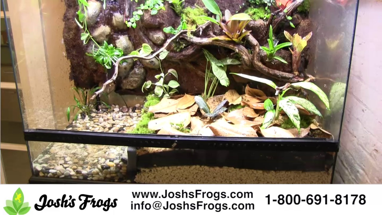 Josh S Frogs Substrate Stop Pond Wall Youtube