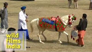 Horse made to dance to dhol beats during rural sports festival
