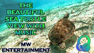 Music enjoy with Sea Turtle   Swimming in sea with Beautiful turtoise   Music World 🌎