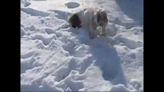 Khloe LOVING the snow! she was being really carefull walking threw ...