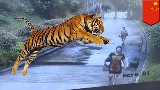 中国・湖南省で、動物園に不法侵入した観光客らがトラに襲われる事態が...