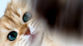 Cats Attack Camera