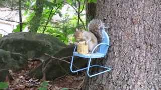 Squirrel In Chair Corn Cobb Feeder
